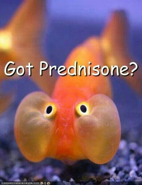 Prednisone # SideEffects  Okay. Getting over it now.  Only problem is that at 68 when moon face goes away, it leaves behind saggy, flabby, jiggle jaw. Not sure which is worse. Maybe I can get a chin sling to hold it all up? LOL