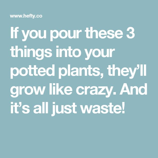 If you pour these 3 things into your potted plants, they'll grow like crazy. And it's all just waste!