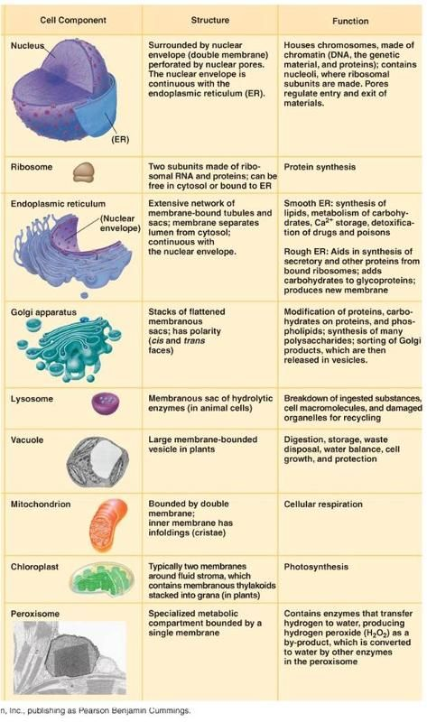 Cell homework help