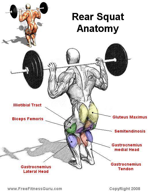 Rear Squat Anatomy