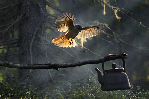 by Kari Leo, 2009 Finnish nature photography winner