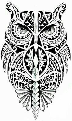 Owl                                                                                                                                                                                 More