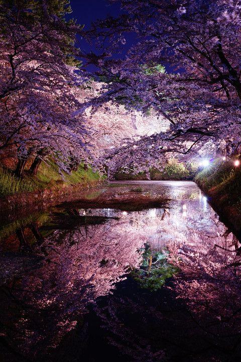 Hirosaki Castle, Aomori, Japan  #桜 #CherryBlossom #reflection