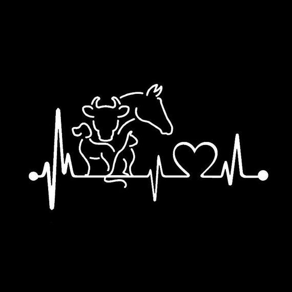 Veterinarian Heartbeat Window Decal by TheGildedBar on Etsy
