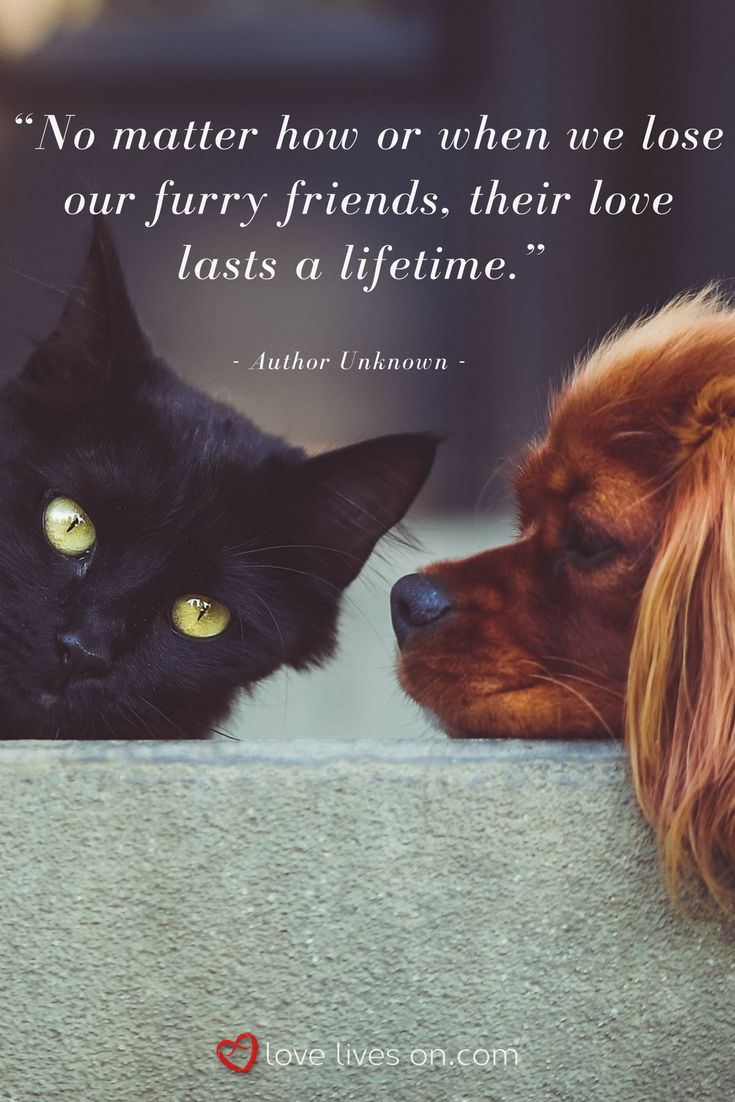 Best Pet Sympathy Quotes Ideas On Pinterest Loss Of Cat - 21 cats proving make best dog blankets