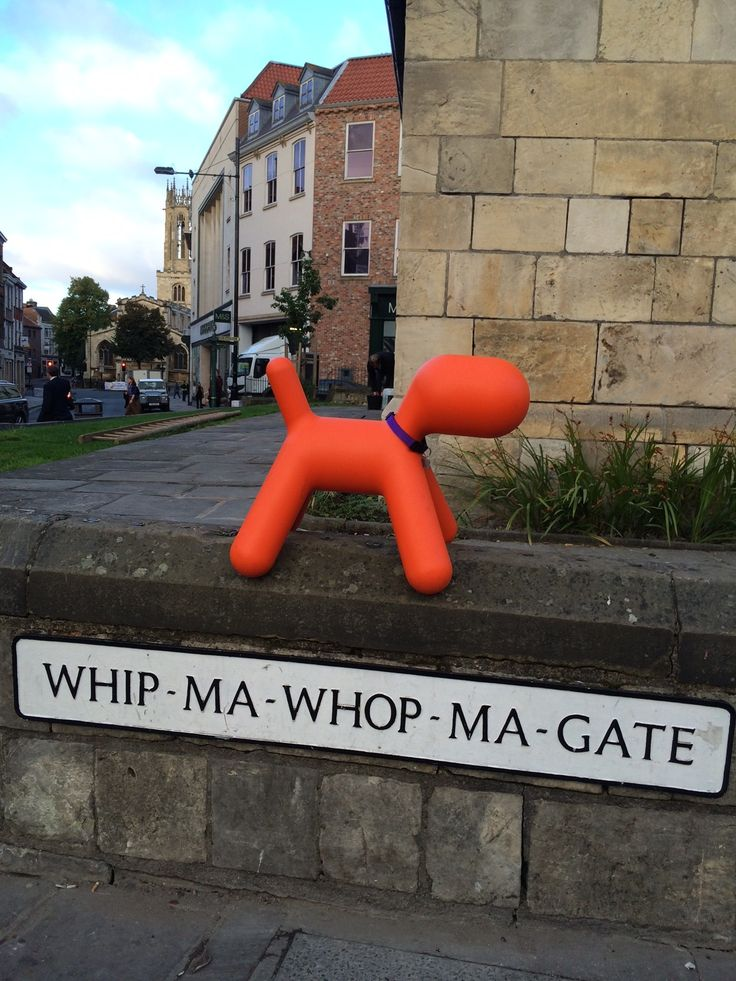 Dogbert (or Terrence as he has temporarily been renamed by the team at Harrowells) whilst on his sabbatical in York.