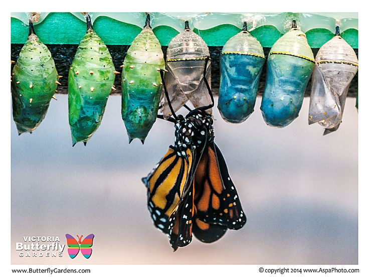 :: Victoria Butterfly Gardens :: Photo Gallery ::