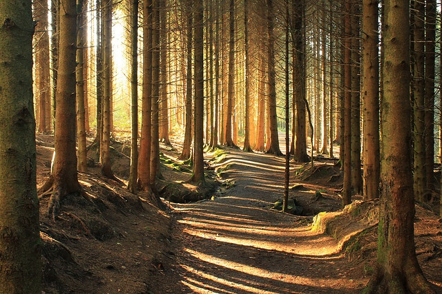 Whose woods these are, I think I know...: Photos, Ireland, Places Traveled, Glenbarrow Walkway, Bloom Glenbarrow, Slieve Bloom