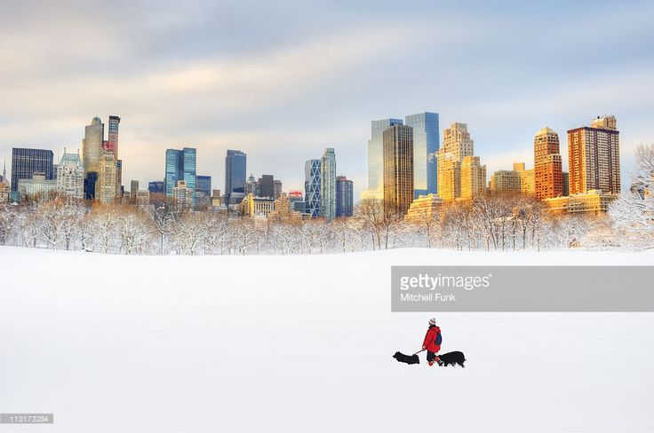 Foto de stock : Snow in Central Park with skyline in background