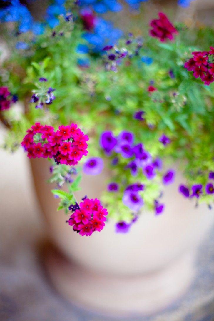 Spring brights fiori giardinaggio e colori for Giardinaggio e fiori