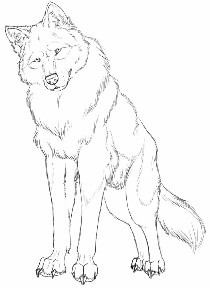 Simple Wolf Lineart : Best images about wolf line art on pinterest coloring