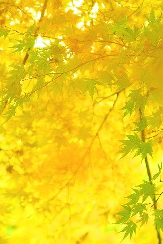 Yellow | Color | Kiiro | Vàng | イエロー | 黄色