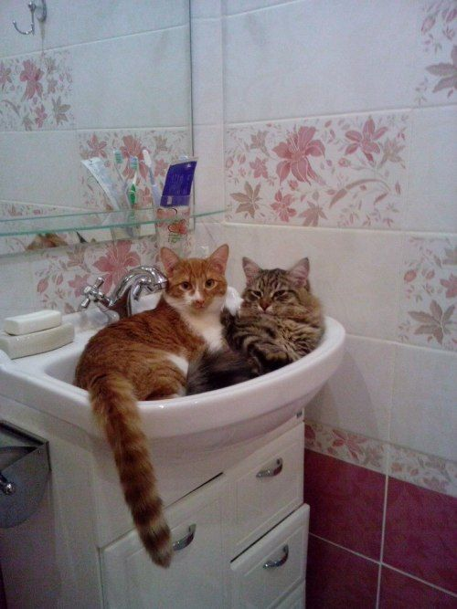 Corporation Cats