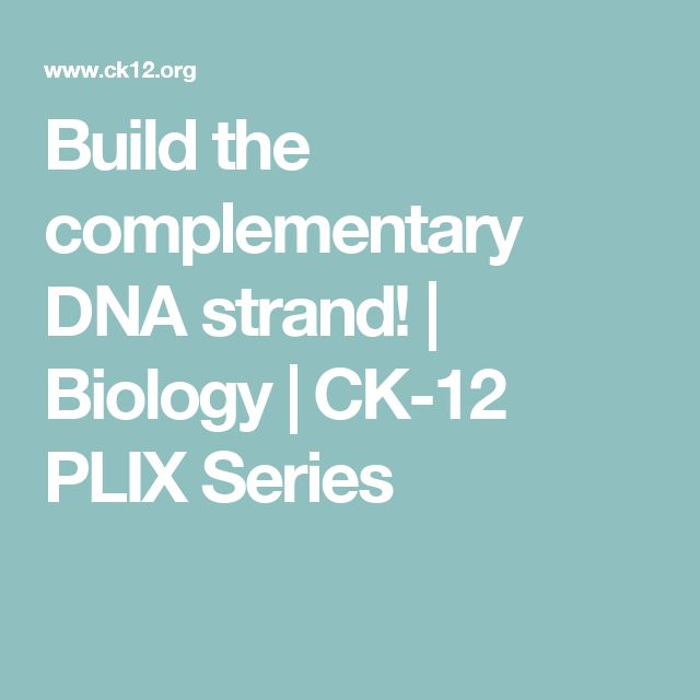 Build the complementary DNA strand! | Biology | CK-12 PLIX Series