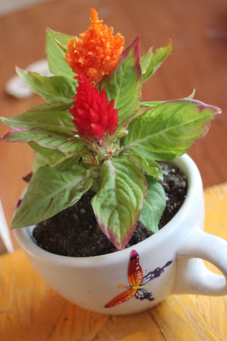 Small flowers for crafts - Pot A Small Flower In A Teacup