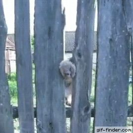 Cat Stuck in Fence