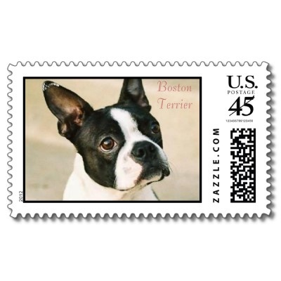 boston terrier 0239 boston terrier postage