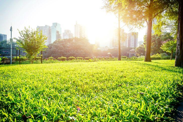 Jak zapewnić miastu piękną zieleń hydrogel | city park, urban green