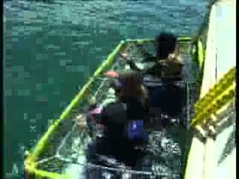 Shark Alley Express - Shark Cage Diving Cape Town