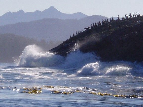 East side of Tofino, Vancouver Island BC
