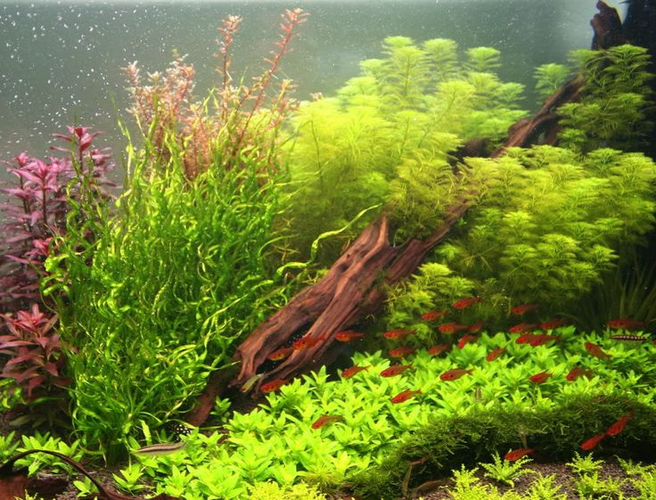 Time to do something different to the 120 Gallon and the 60 Cube - Aquarium Plants - Barr Report