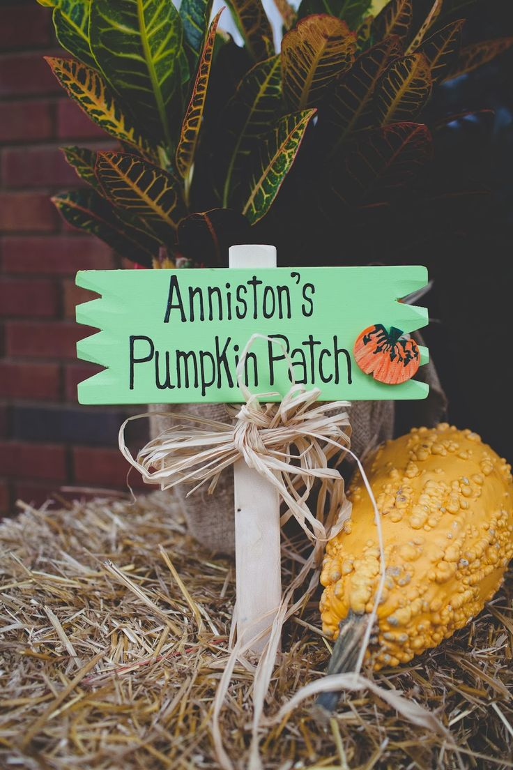 "Party decoration inspiration | Handbags & Hair Bows: Anniston's ""Pumpkin Patch"" Birthday Party"