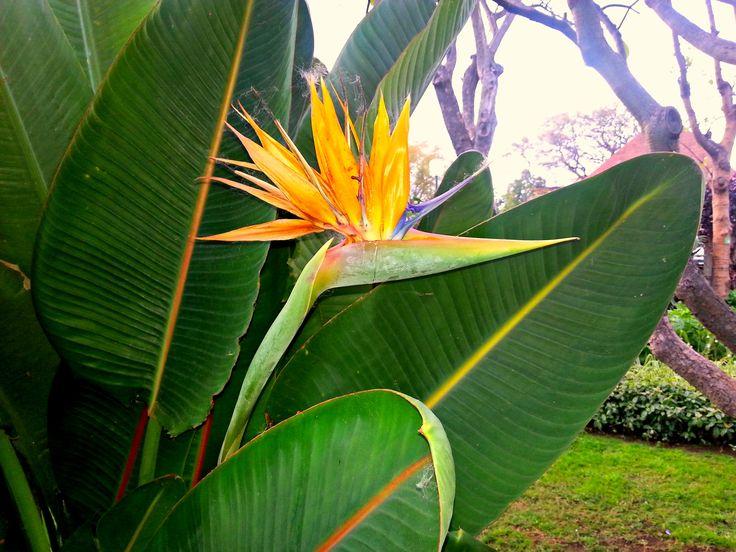 Botanikuskert Madeirán:  A trópusi és szubtrópusi flóra szinte minden virága megcsodálható itt.   https://www.youtube.com/watch?v=fNKW4nEaWoM