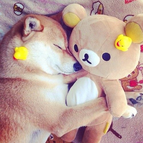 Must see Rilakkuma Anime Adorable Dog - cb596ae7b38367e7040f66f42591a822--take-a-nap-teddy-bears  Pic_527455  .jpg