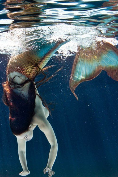 Diving mermaid