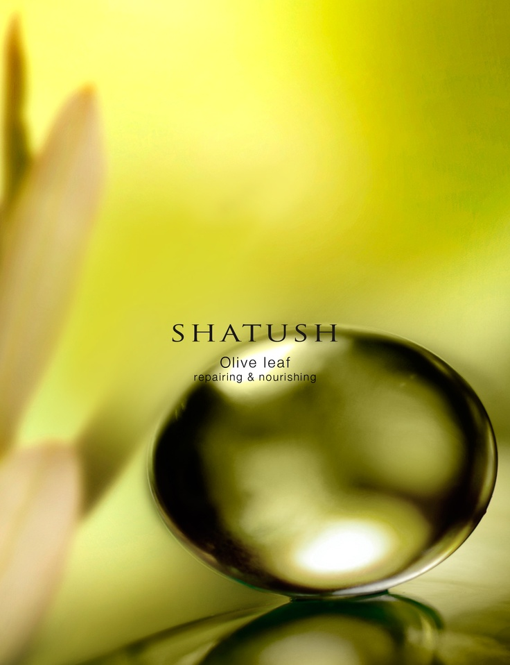 Organic olive leaf extract in cosmetic products ensures maximum protection of the hair fibres and scalp. Its antioxidant qualities against chemical stress help maintain hair strength and shine.  #Shatush #olive #color #SistemaColore