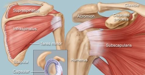 MCQ.Shoulder & Rotator cuff Question with Answer P.1 » How ...