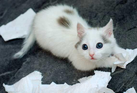The Best Hypogenic Cats