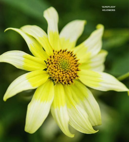 Les 121 meilleures images du tableau fleurs et plantes sur - Plante a fleur jaune 6 lettres ...