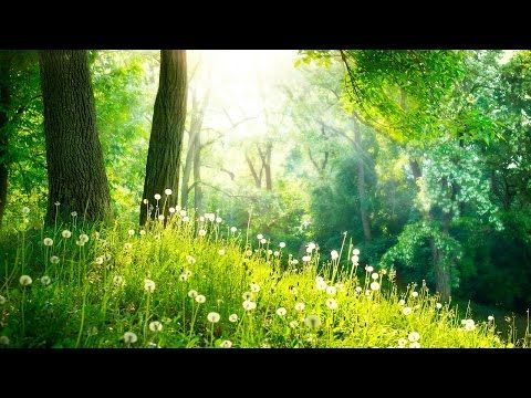 1 Hour of Relaxing Instrumental Hymns   Harp, Flute, Strings, and Orchestra - YouTube