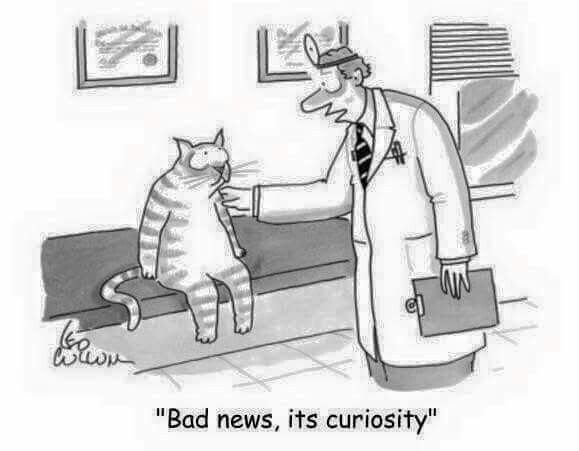 Curiosity killed the cat!                                                       …