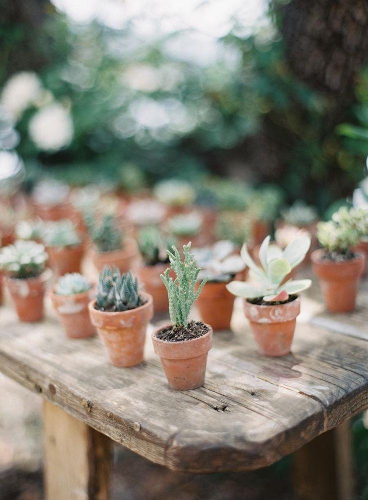 IDÉE DÉCO TABLE: des minis cactus au milieu des autres plantes/fleurs, pr le côté nature??!