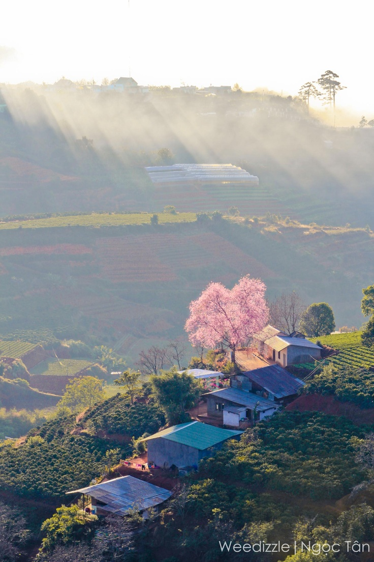 One of the best photos ever taken in Dalat, Vietnam