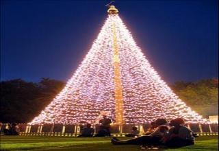 Christmas tree Africa, Johannesburg.