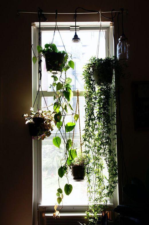 Une tringle à rideaux pour suspendre les plantes devant la fenêtre - Use a curtain rod to hang plants in front of windows.  Get nice pots and hang at different heights.