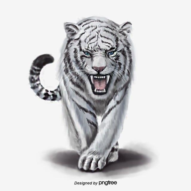 Tiger King Png / Tiger King Images Tiger King Transparent ...