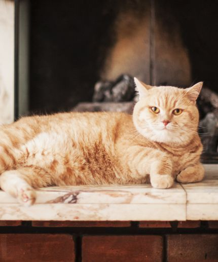 The most popular cat names of the year (this is important)