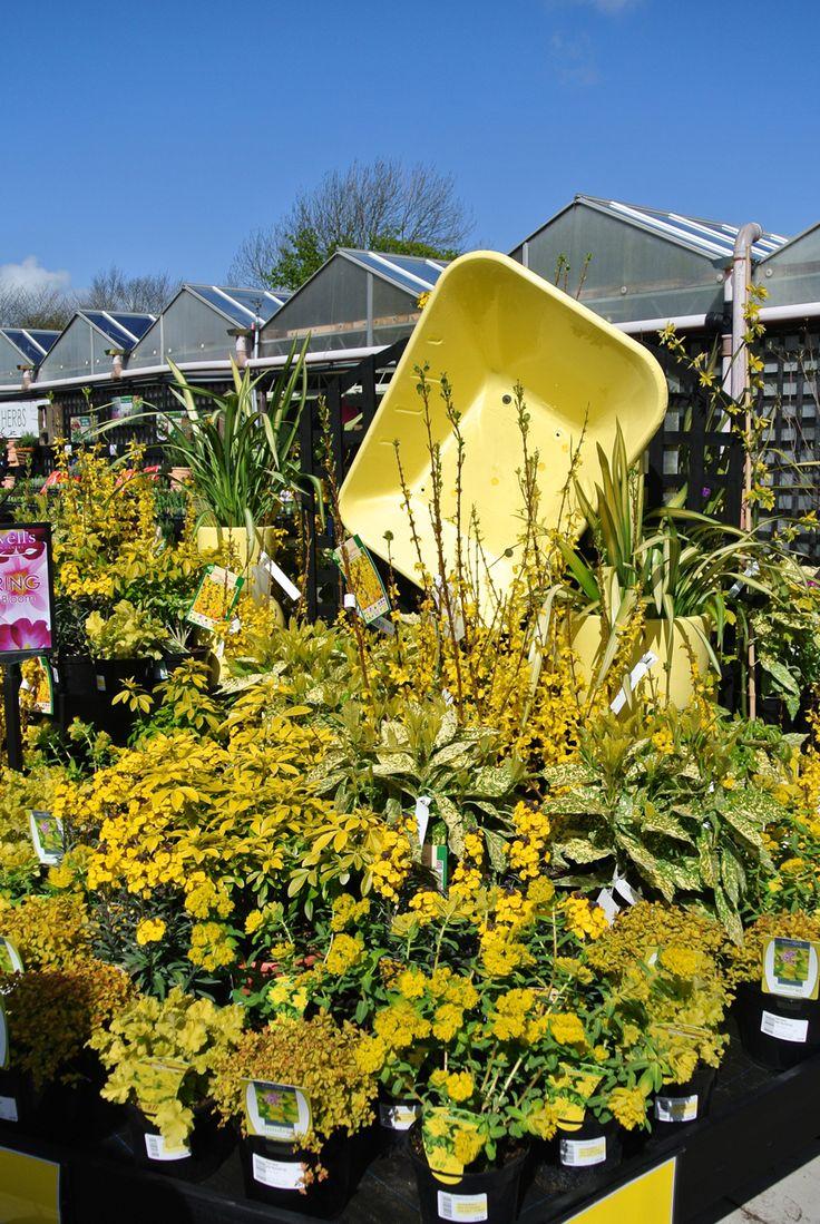 Cowells Garden Centre has strong visual merchandising                                                                                                                                                     More
