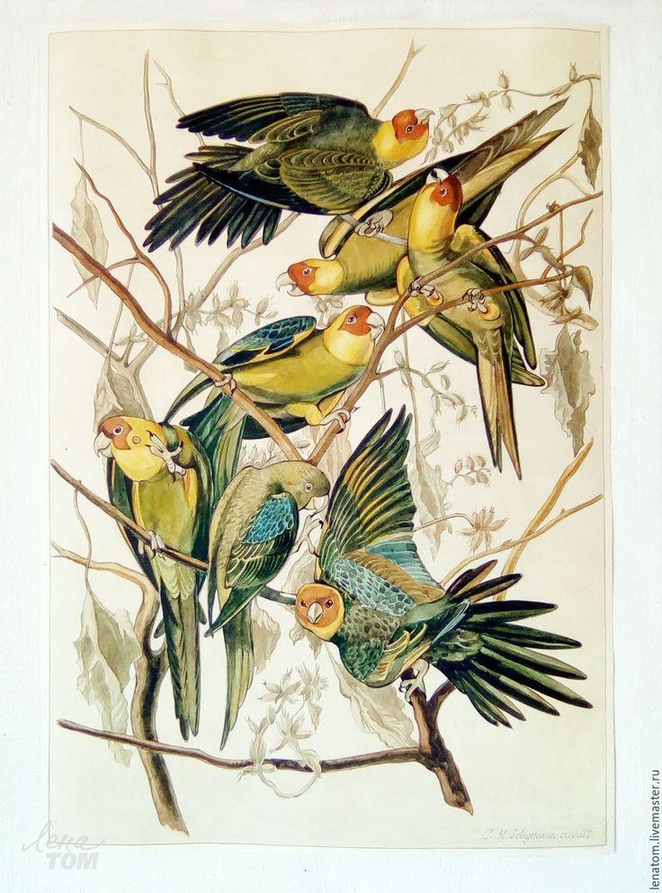 Купить или заказать Попугаи' акварель копия с рисунка Дж.Одюбона в интернет-магазине на Ярмарке Мастеров. Акварель в винтажном состоянии, копия с рисунка Дж.Дж. Одюбона, известного американского натуралиста, автора великолепнейшей и самой дорогой в мире книги 'Птицы Америки'. Рисунки птиц были сделаны им в 1820-1830г.г. в натуральную величину. Джон Джеймс Одюбон - Birds of America. Carolina Parakeet , Conuropsis carolinensis, hand-colored engraving. Каролинские попугаи.