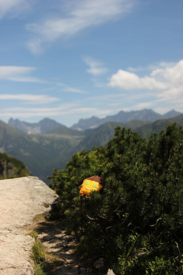 Tosiek na tatrzańskim szlaku
