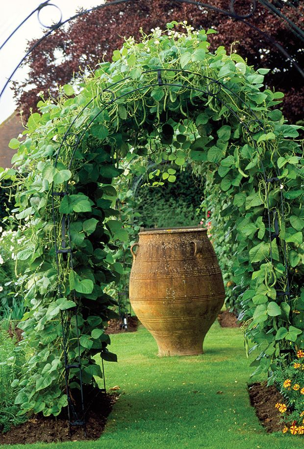 Decorative Vegetable Garden Ideas Part - 29: Beans Are Growing On This Arbor. Hanging Down For Easy Pickinu0027. You Can  Make A Vegetable Garden Look Pretty And Well-designed.