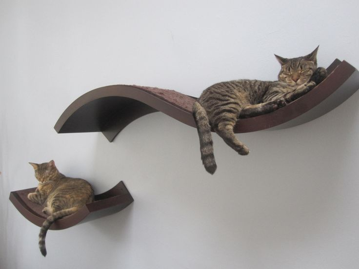 """Cats need vertical space; it enables them to survey their world from a safe perspective."" cat shelves are a great alternative."