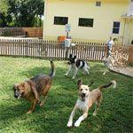 Si te vas de vacaciones y no puedes llevarte a tu mascota, ¡Echa un vistazo a nuestras residencias para mascotas!