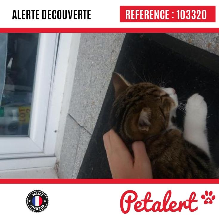 21.11.2016 / Chat / Tournefeuille / Haute-Garonne / France