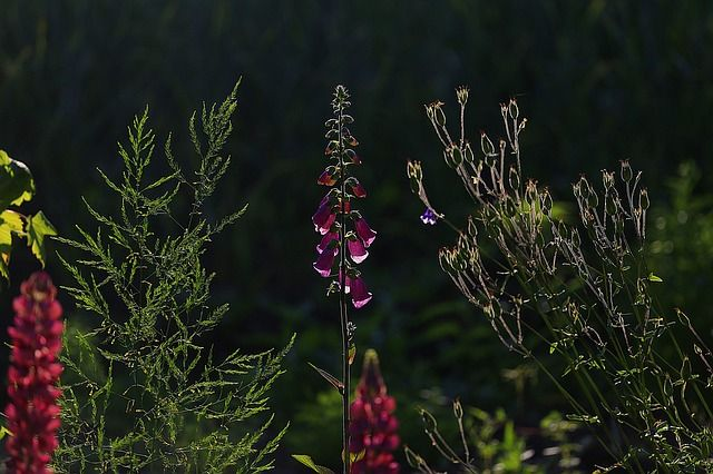 Schoonheid, Bloemen, Tuin Bloemen, Natuur, Zomer, Bloom