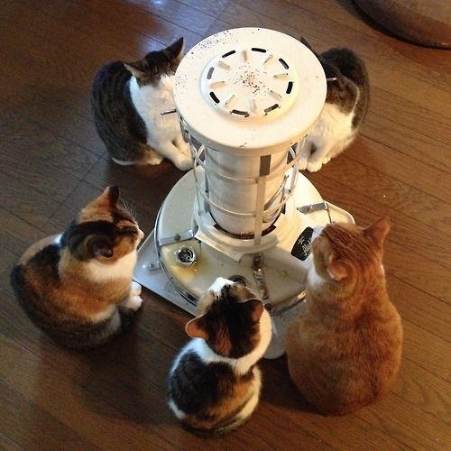 ストーブを囲む猫 - まとめのインテリアの画像